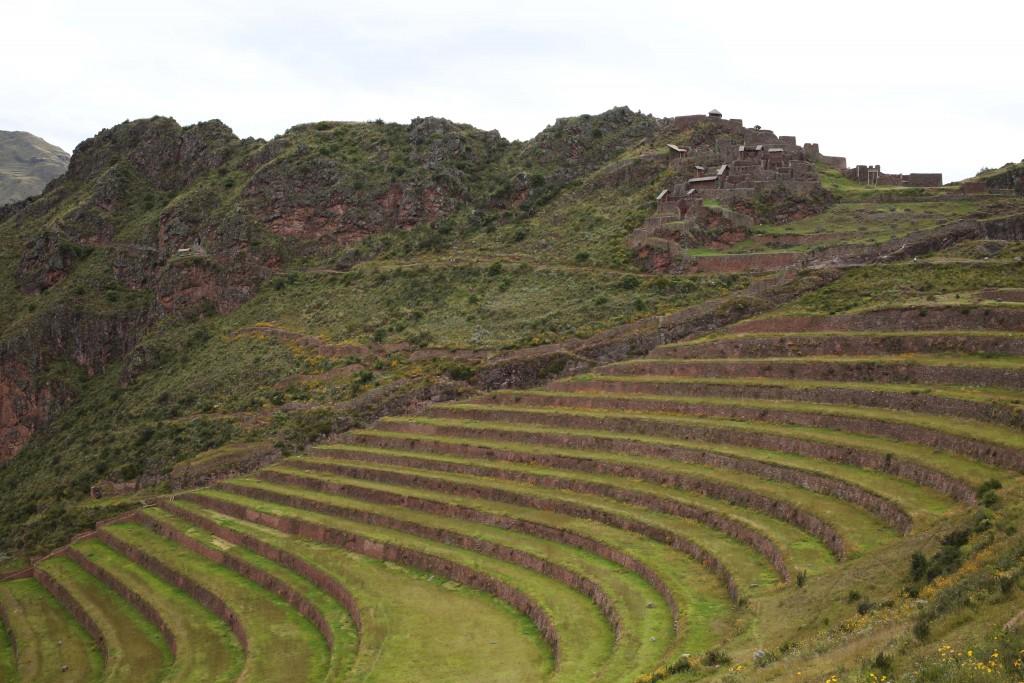 Les cultures en plateau à Pisac